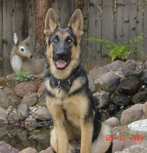 7 month old male Flora Bronson's 1st litter